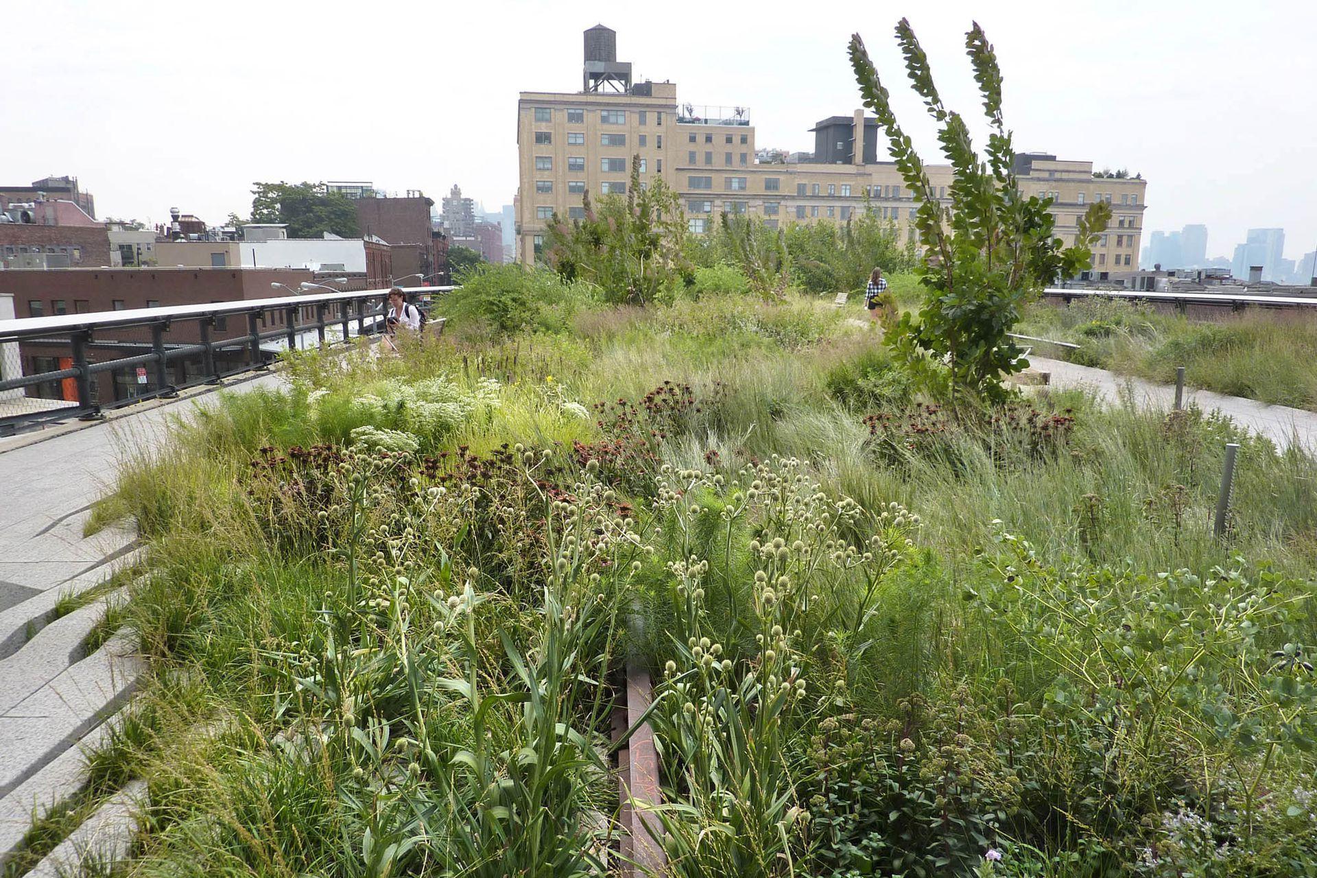 """Cantero central del High Line Park. Se combinan diferentes especies que cambian en las distintas épocas, creando nuevas sensaciones. Las plantas crecen entre las """"grietas""""."""