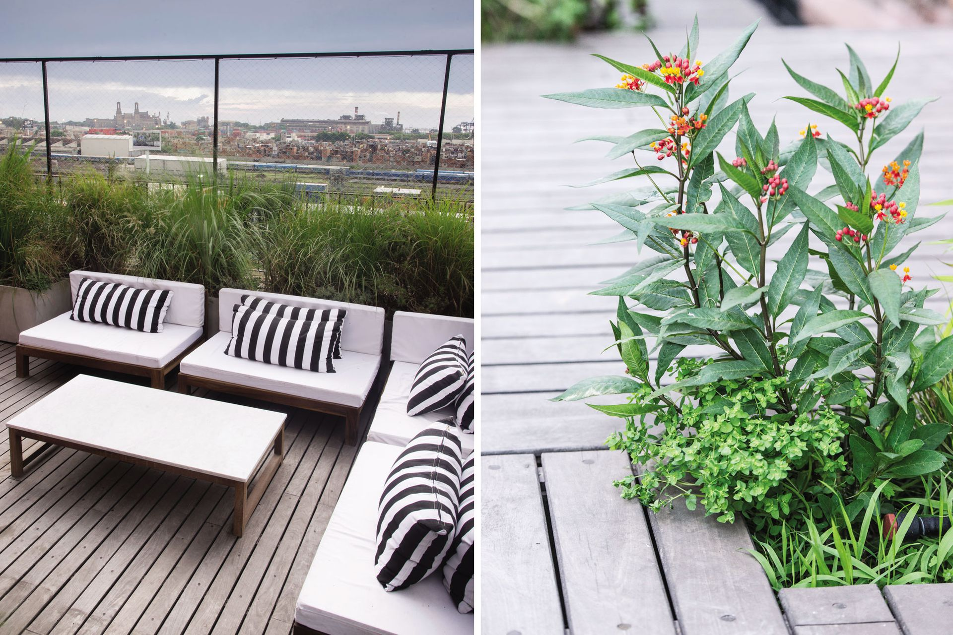 """Un juego de living de madera dura en """"L"""" protagoniza uno de las esquinas de la terraza. Especies como Asclepia curasavica (derecha) componen un conjunto compuesto por plantas altas y silvestres."""