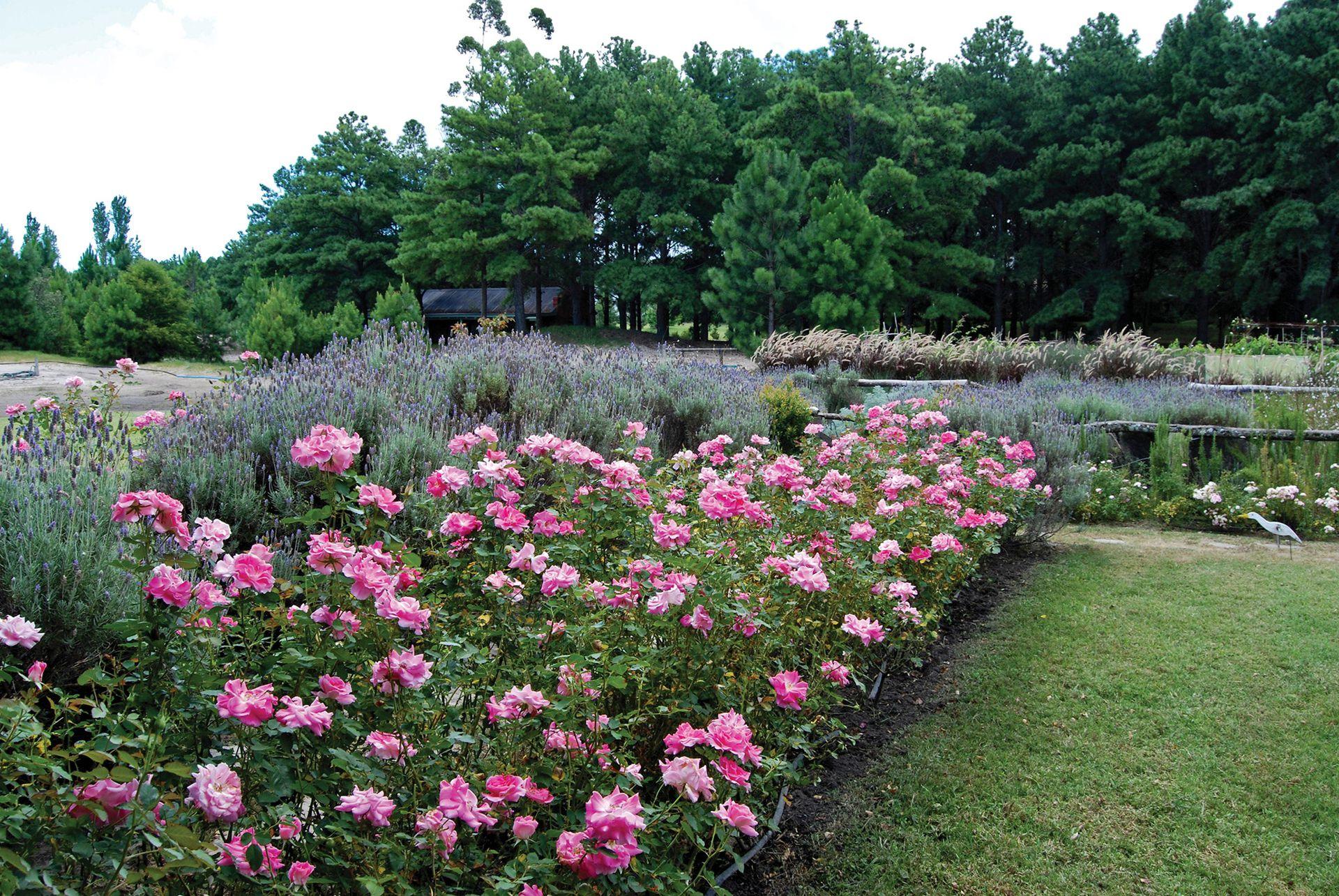 En su mayoría, la enorme cantidad de rosas de esta casa son inglesas y francesas.