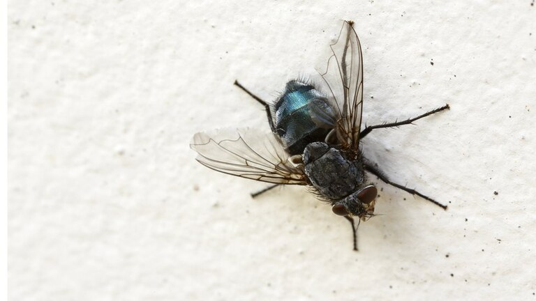 Partió de una mosca para construir un puente.
