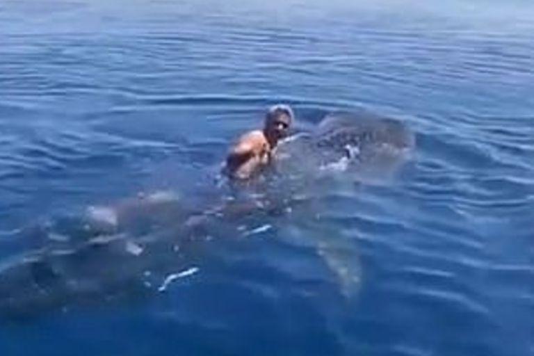 El episodio tuvo lugar en el Mar Rojo, cerca de la costa de Yanbu, y fue repudiado por defensores de los animales (alalwaniabdullah/Newsflash)