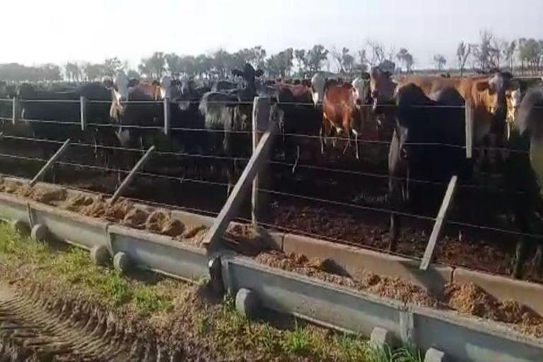 El caso de las 3500 vacas robadas: quién es el nuevo detenido