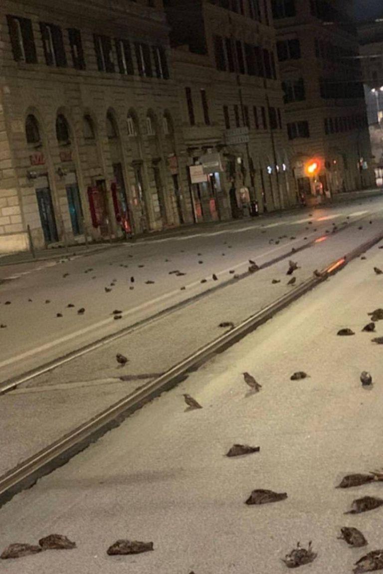 Las aves eran en su mayoría estorninos y aparecieron sin vida en las calles cercanas a la principal estación de tren de Roma, tras una exhibición potente de cohetes y fuegos artificiales