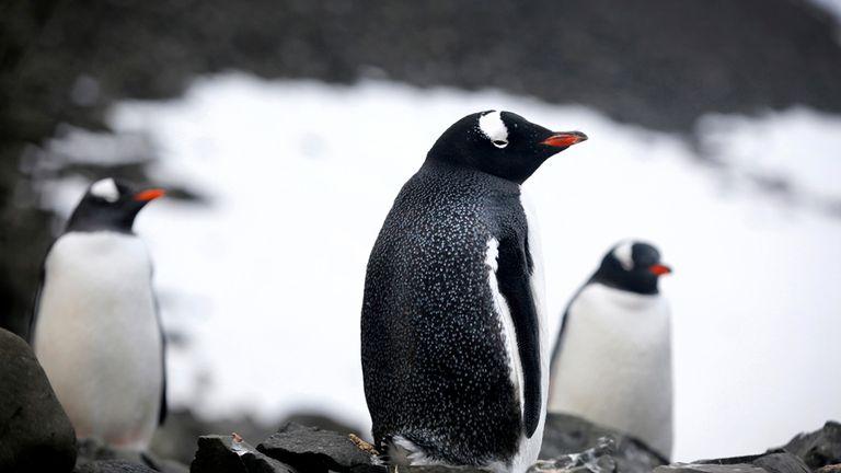 Los pingüinos, protegidos en la reserva de la Isla 25 de Mayo