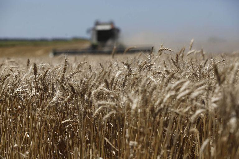 Moscú busca reducir los precios mediante la limitación de las exportaciones de trigo