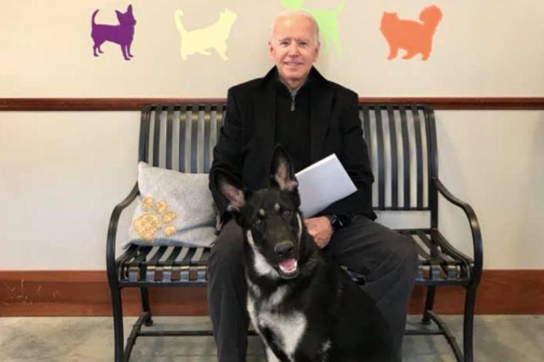 El perro de Biden será la primera mascota presidencial rescatada de un refugio