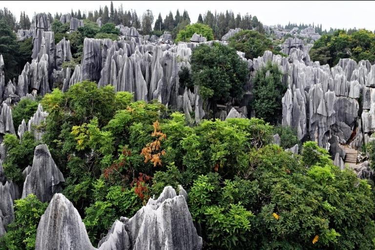 Los antiguos árboles se alzan como columnas y torres afiladas que alcanzan entre 30 y 40 metros de altura