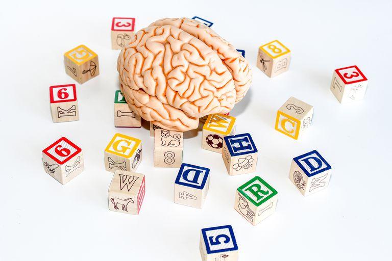 Lograron dilucidarlo gracias a un experimento con equipamiento que no existe en el país; podría aplicarse al diagnóstico de enfermedades neurológicas y al aprendizaje de idiomas