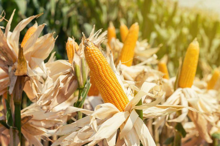 Claves para un cultivo con múltiples beneficios