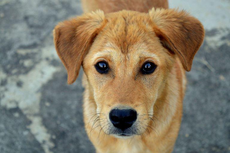 Un catálogo muestra a los perritos en adopción