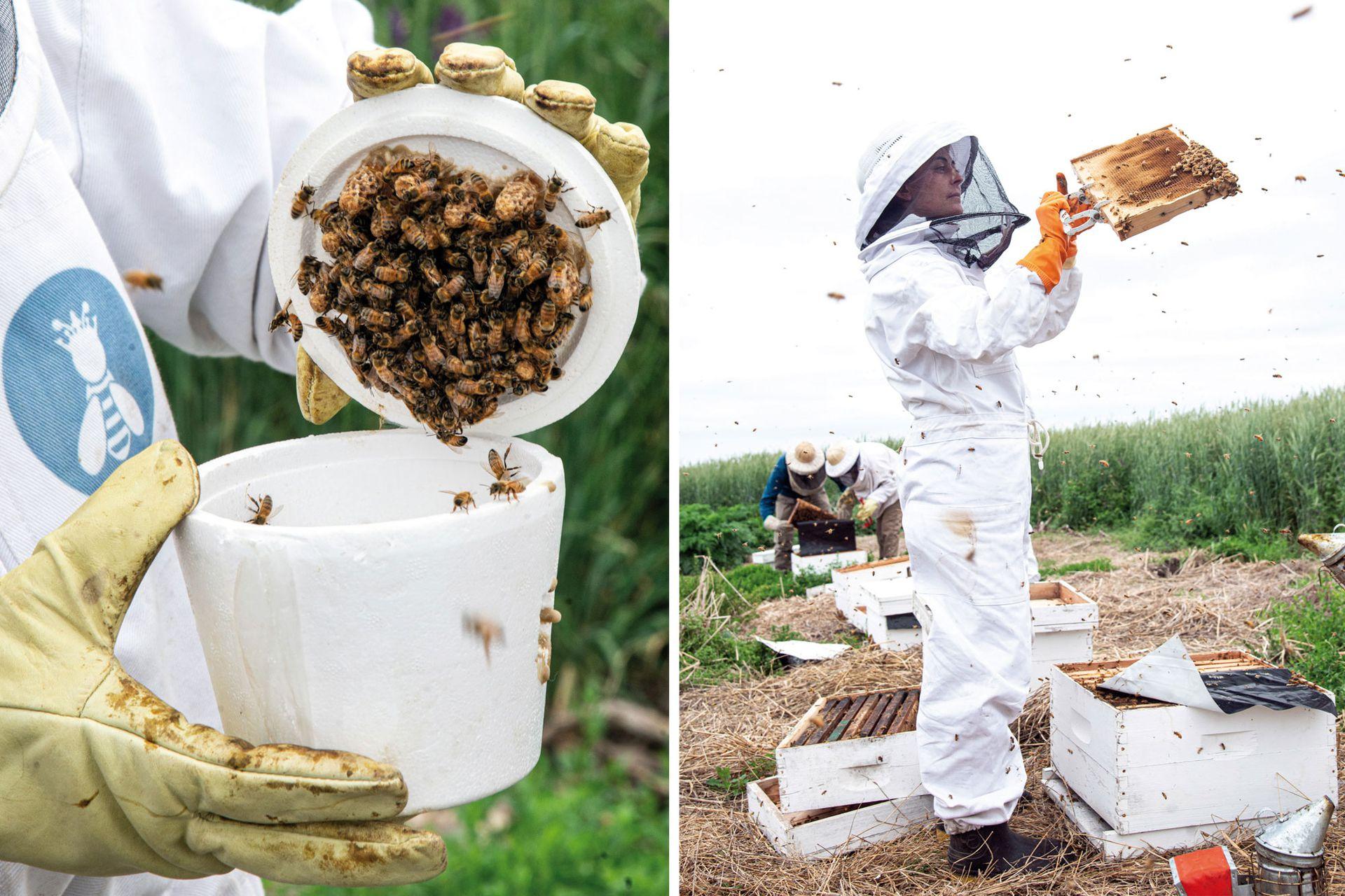 Izquierda: El grupo Reinas formó también un criadero de abejas reinas y celdas reales. Derecha: María Casquero, apicultora que forma parte del grupo Reinas Pehuajó.