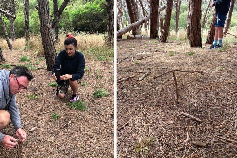 """El fenómeno de las ramitas que se """"imantan"""" entre sí es un clásico del bosque energético de Miramar"""