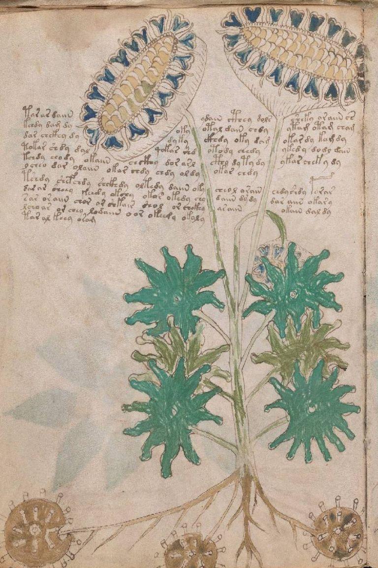 Las plantas y flores que aparecen en el códice Voynich pertenecen más al terreno de la fantasía que de la botánica real