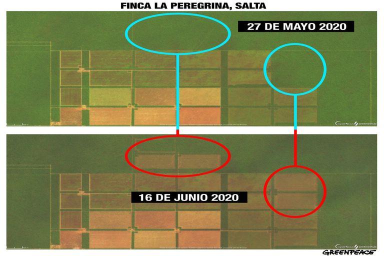 La ONG Greenpeace realiza un monitoreo satelital de las hectáreas deforestadas en cuatro provincias del norte de la Argentina