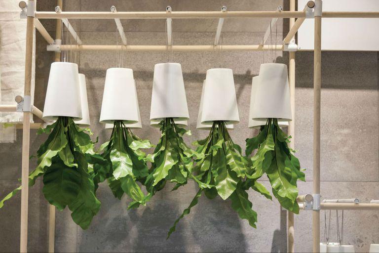 Jardín interior: ideas para decorar los ambientes con plantas