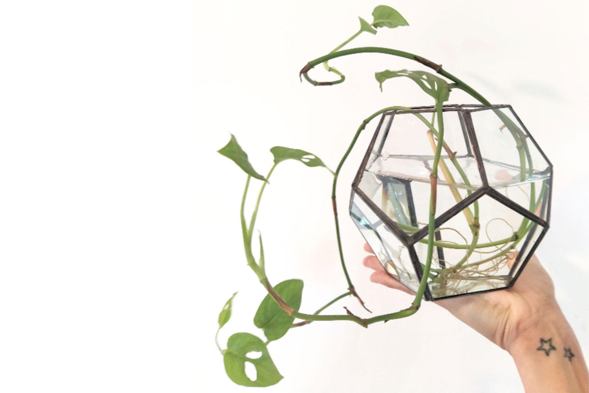 Con vidrios unidos por finas láminas de cobre soldadas entre si, Xoana Verón, docente, comenzó con este proyecto hace 9 meses, en plena cuarentena, y hoy vende sus productos a distintos viveros al por mayor y menor. Los precios varían entre $ 1900 y $ 2300. IG: @serendipia_terrarios
