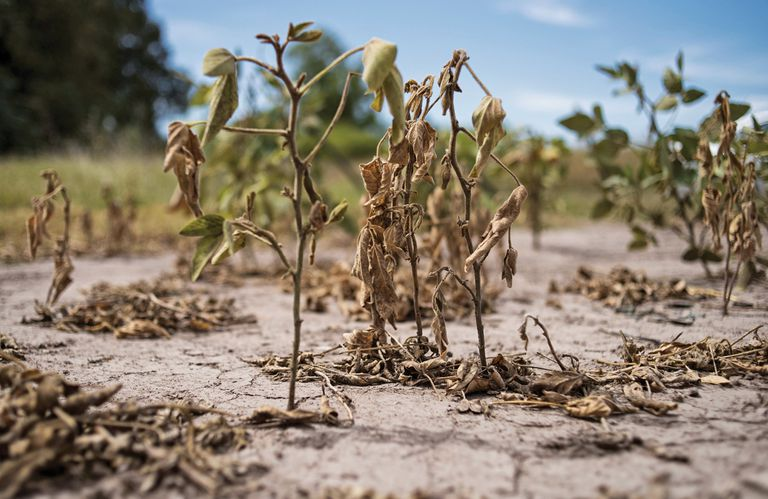 La sequía argentina, entre los 10 fenómenos climáticos más destructivos del año