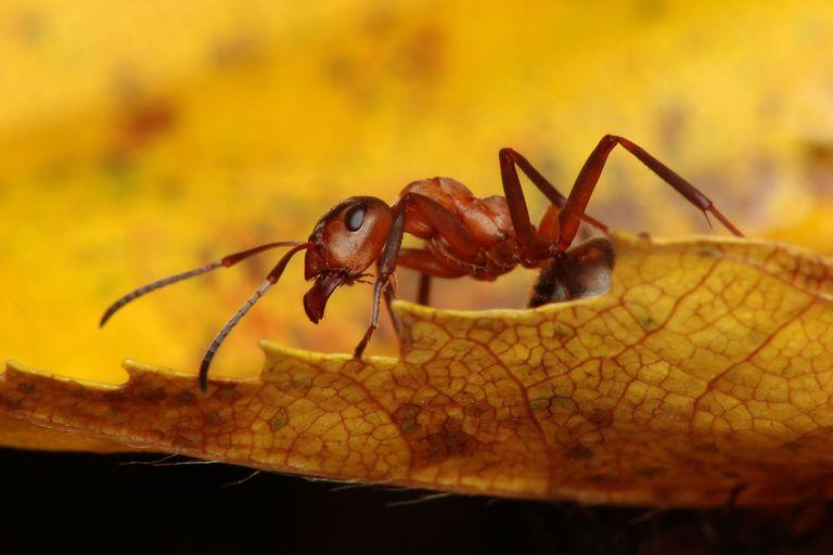 Los científicos descubrieron que la colonia de hormigas había crecido en número, a pesar de que no había una fuente de alimento obvia, ni calor ni luz. ¡Ahora había al menos un millón de hormigas viviendo en el búnker!