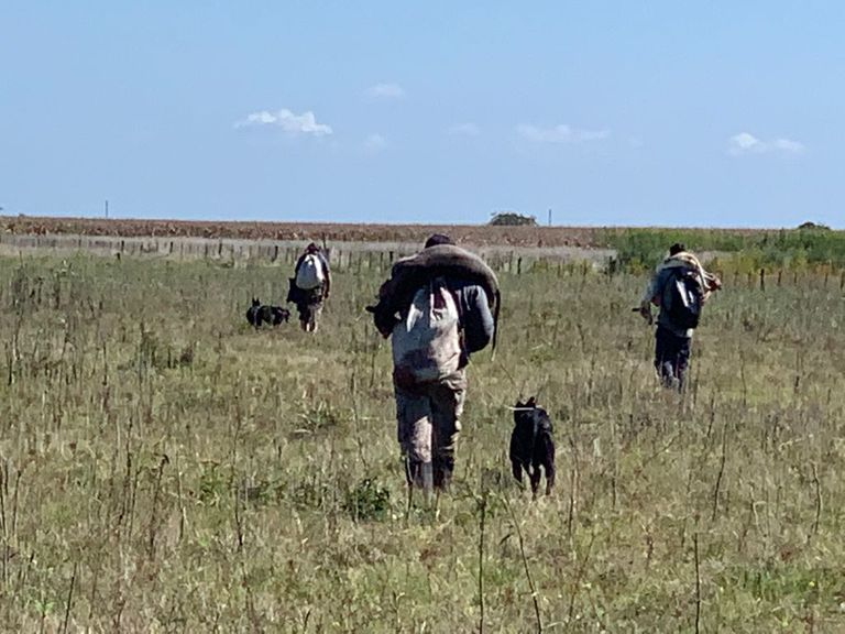 Galgueros caminan dentro de un establecimiento privado, llevan sobre sus hombros animales autóctonos cazados con los perros