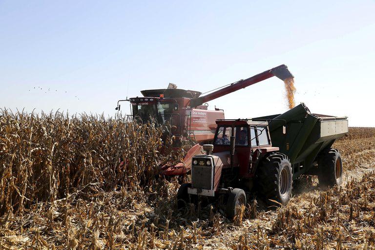 De maíz en abril pasado se anotaron DJVE por 4,6 millones de toneladas, el volumen más elevado desde noviembre de 2019