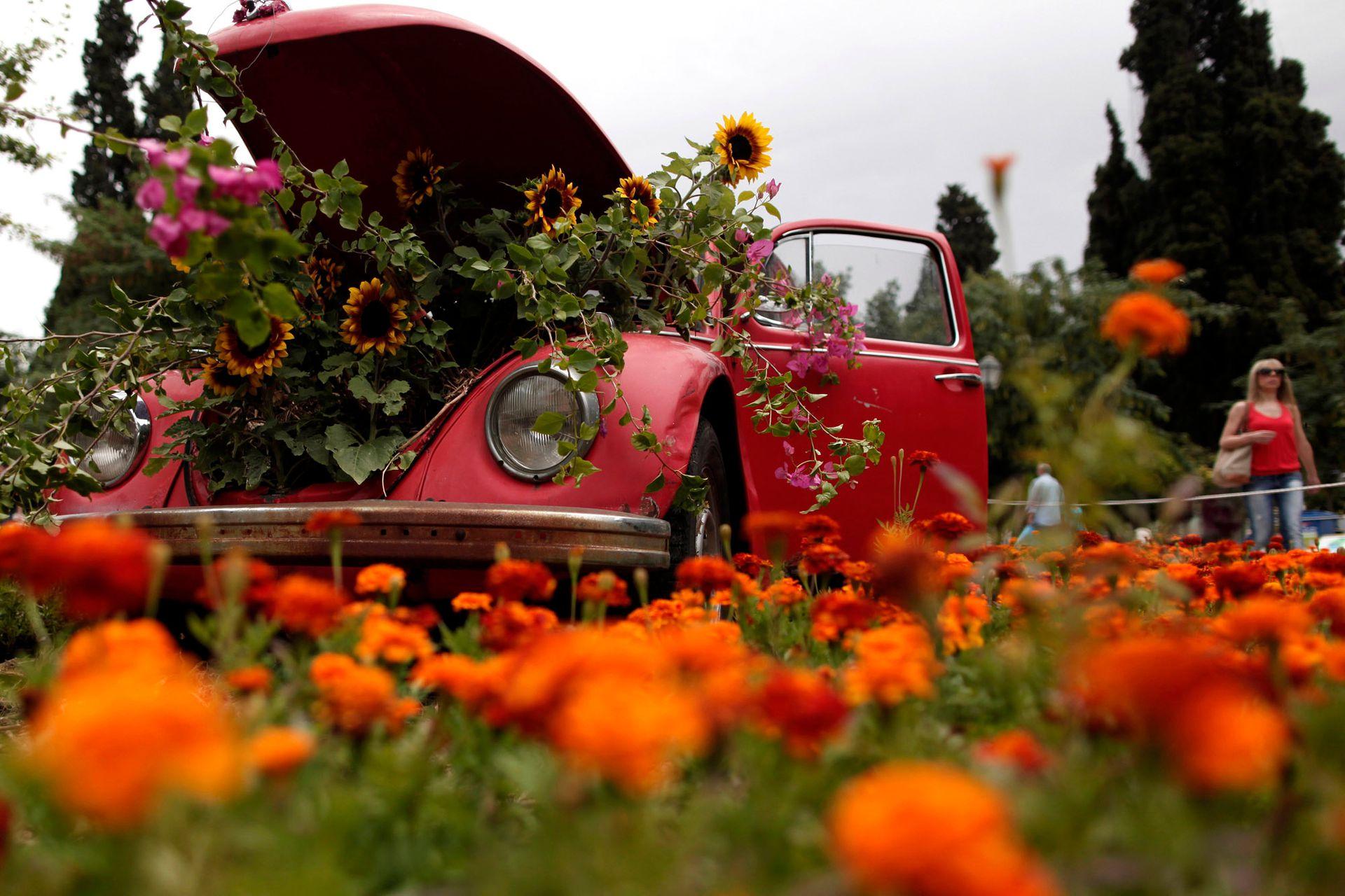 Girasoles en maceta que salen del capó de un viejo Volkswagen Beetle en el centro de la plaza Syntagma, en Atenas, Grecia