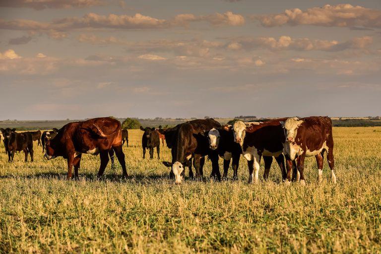 Organizan el congreso de la Asociación Argentina de Producción Animal