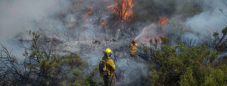 Bosques en extinción. La deforestación pone en riesgo al planeta