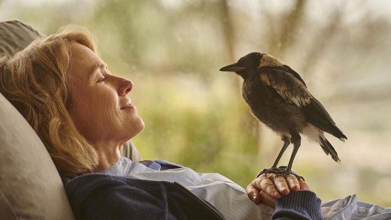 Penguin Bloom, la conmovedora historia entre una mujer y un ave que es furor en Netflix