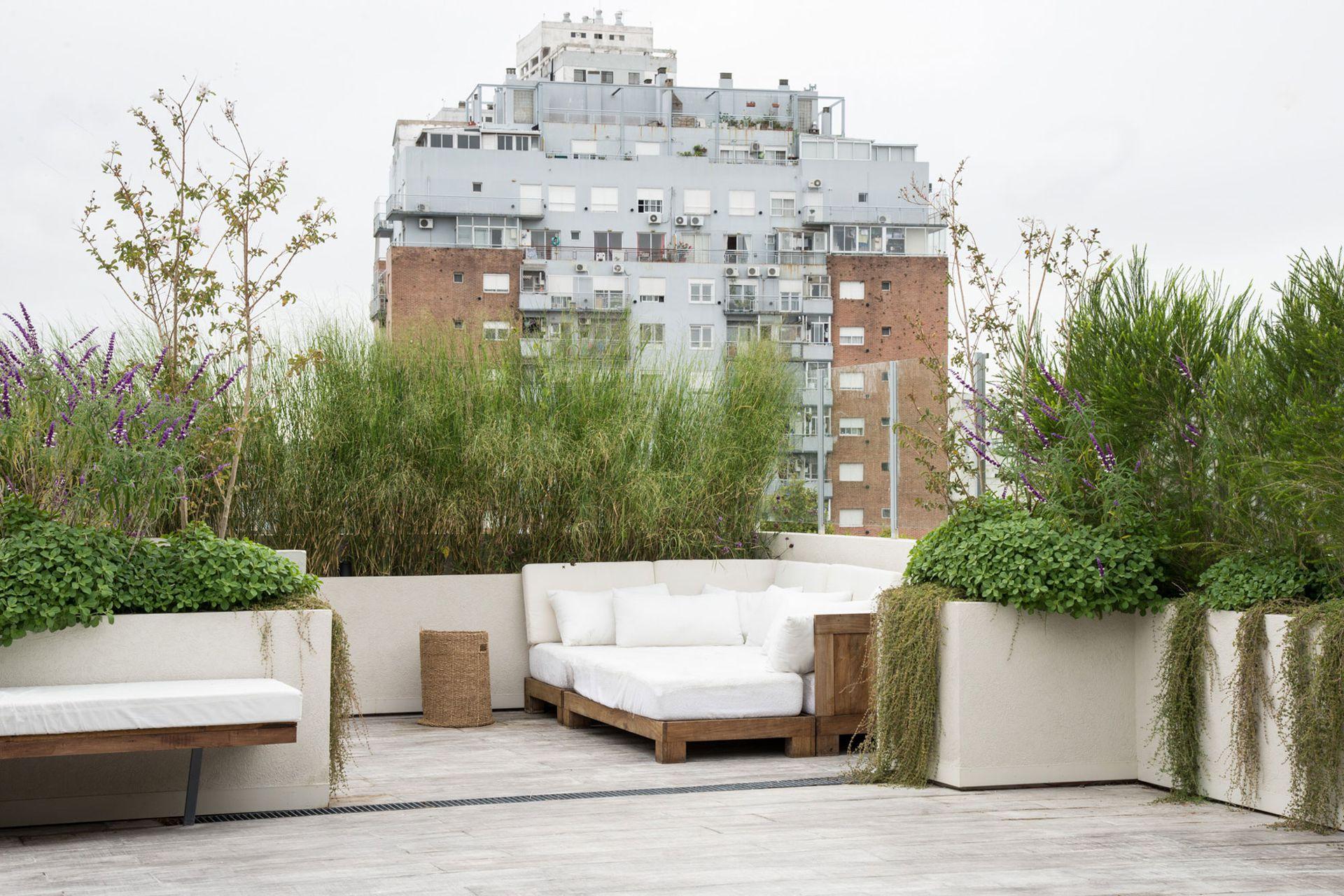 Según las especies elegidas, las plantas pueden ser aliadas para tapar las vistas en balcones y terrazas.