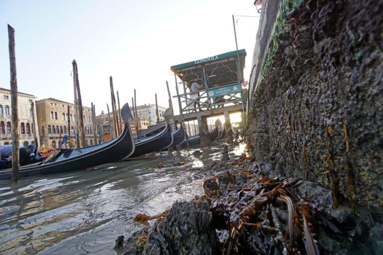 Venecia se encuentra en una situación crítica, con muy poca agua en sus canales (ANSA)