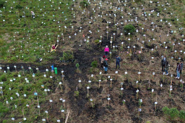 Vista aérea que muestra a familiares de víctimas del Covid-19 esparciendo sus cenizas en huecos donde plantan árboles durante un homenaje a sus seres queridos y como parte del programa Cenizas Fuente de Vida de la ONG ambiental Colombia Life Reserve en la reserva natural de Páramo de Guerrero en el municipio de Cogua, cerca de Bogotá. (Foto de Raúl ARBOLEDA / AFP)