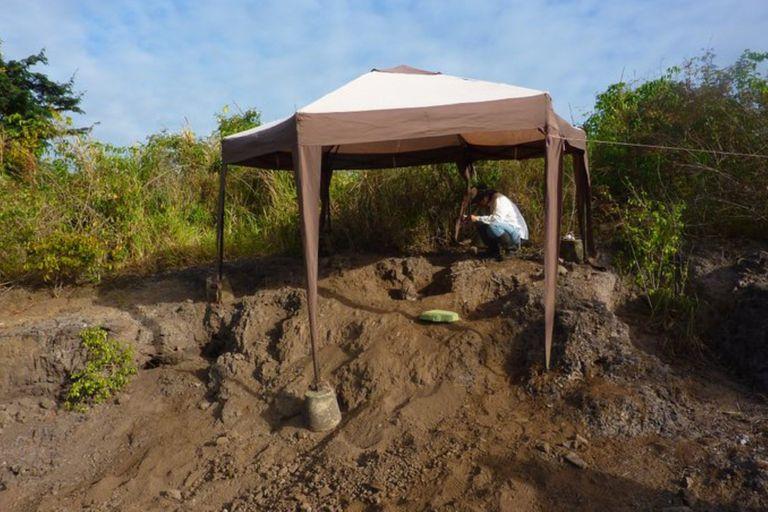 Un grupo de paleontólogos descubrió en Venezuela el resto fósil del murciélago vampiro más antiguo del mundo