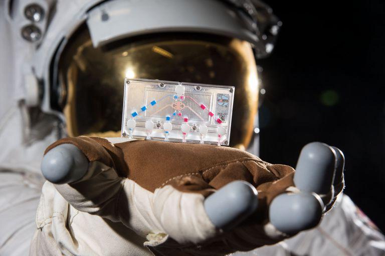 NASA y SpaceX: cuáles son los experimentos que llevan los astronautas a la EEI