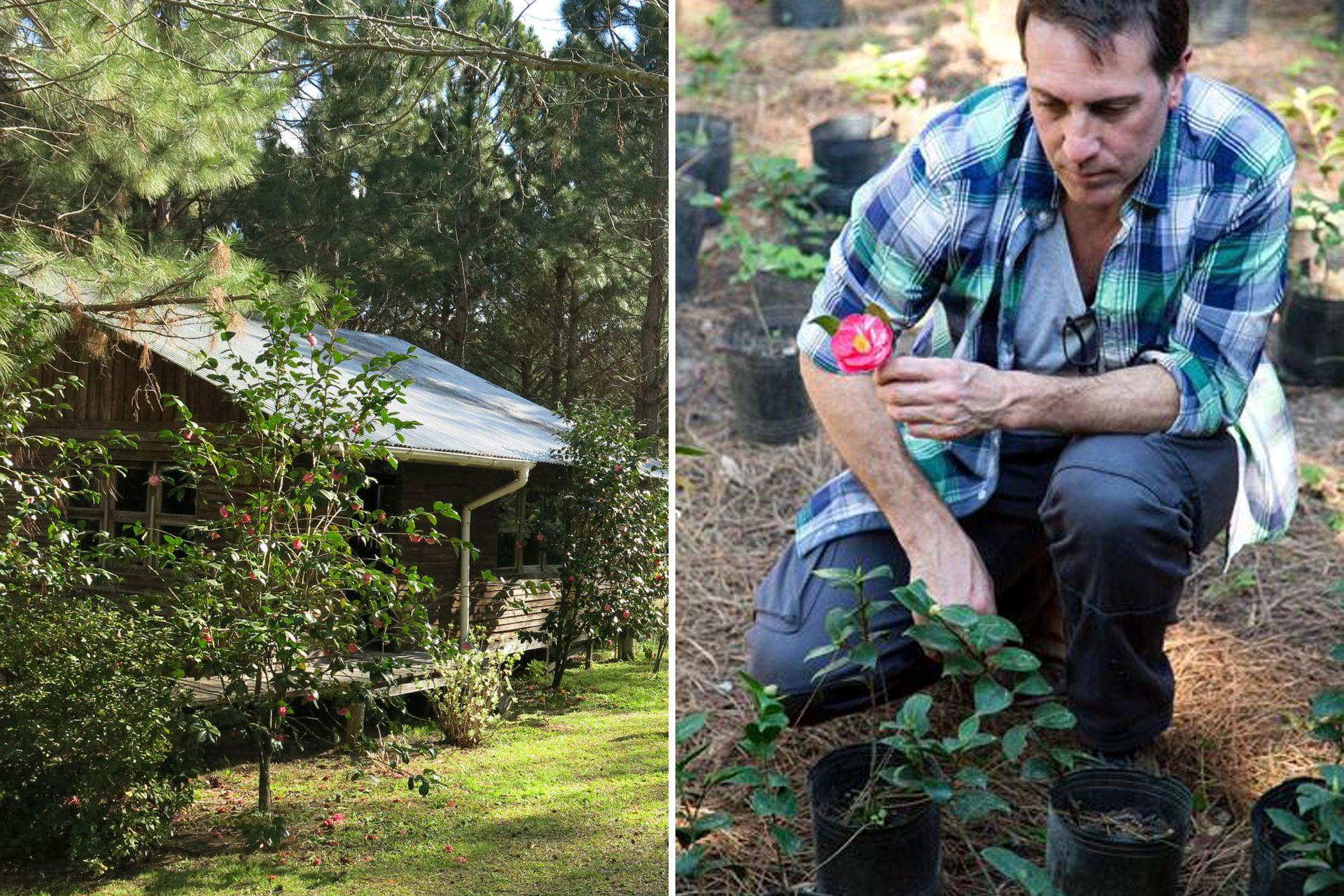 En la Isla de las Camelias, Hernán Marquez cultiva distintas variedades de esta planta y recibe a turistas y fanáticos que quieren verlas en plena floración. Su cuenta de Instagram es @isladelascamelias.
