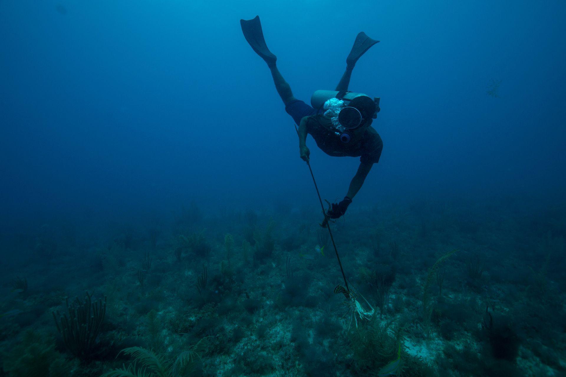 Ernesto Ronas de 30 años, durante la inmersión para pescar langostas