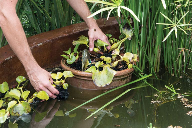 Paso a paso, cómo hacer en casa un filtro casero para estanques