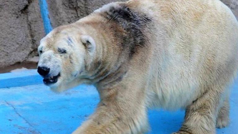 El oso Arturo fue enterrado en el Zoológico provincial de Mendoza