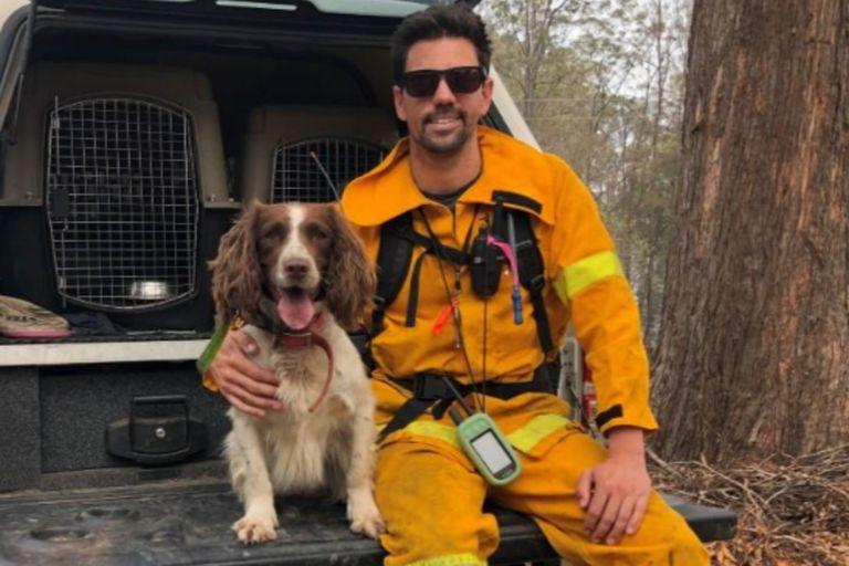 Taylor trabaja con bomberos y voluntarios en el rescate de koalas