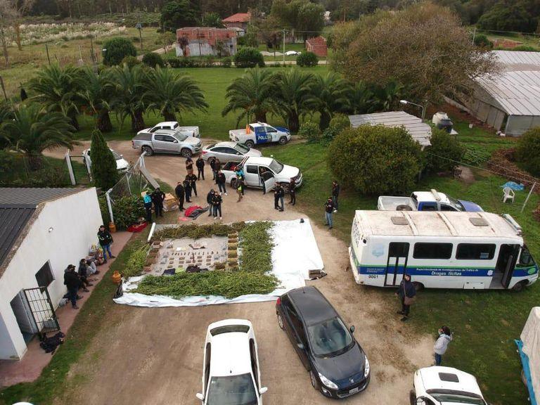Un policía, jefe de una banda que producía una variedad más potente de marihuana en Mar del Plata