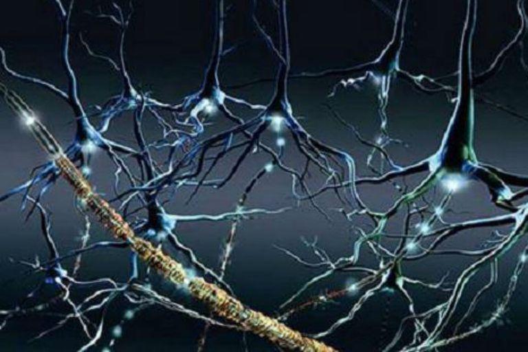 La esclerosis múltiple afecta la mielina en el cuerpo humano, una sustancia que recubre los nervios que conducen los impulsos eléctricos desde el cerebro hacia la periferia del organismo y viceversa