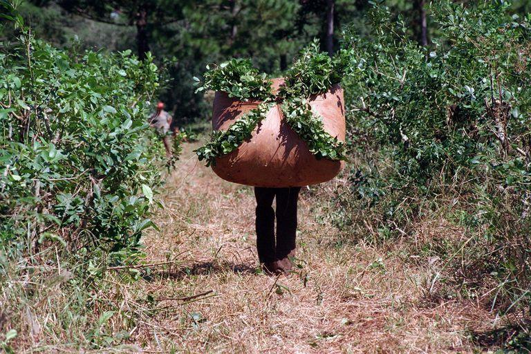 Pensá en verde: la yerba mate se le planta a la crisis