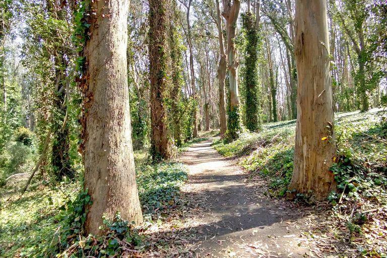 Una caminata por el parque Presidio, fotografiada con los lentes