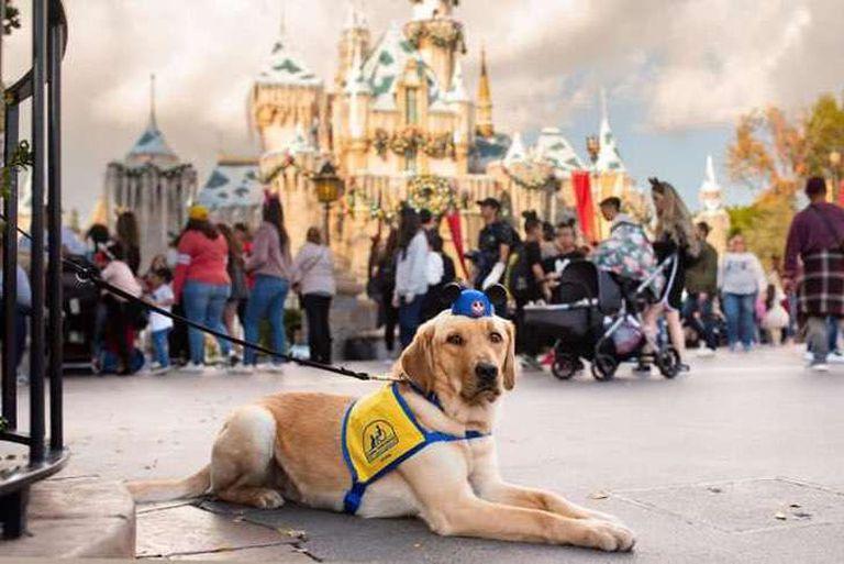 Mirá cómo reaccionó un perro al conocer a Cenicienta en Disney