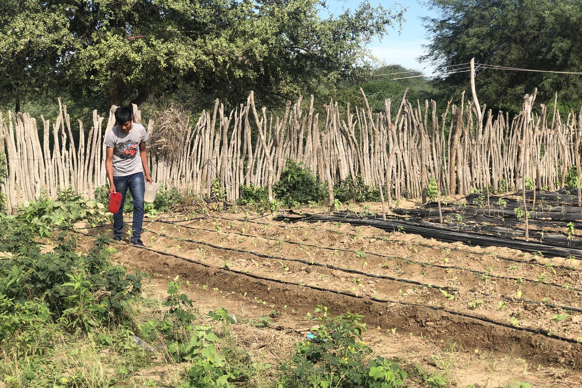 Kevin Díaz riega los zapallos y las tomates de la huerta familiar en su casa en La Puntana, en Santa Victoria Este, Salta