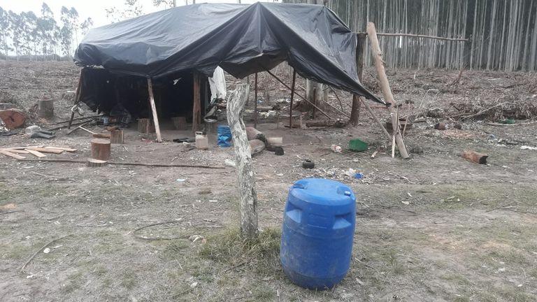 Operativo contra la explotación laboral en un campo de eucaliptos en Concordia, Entre Ríos