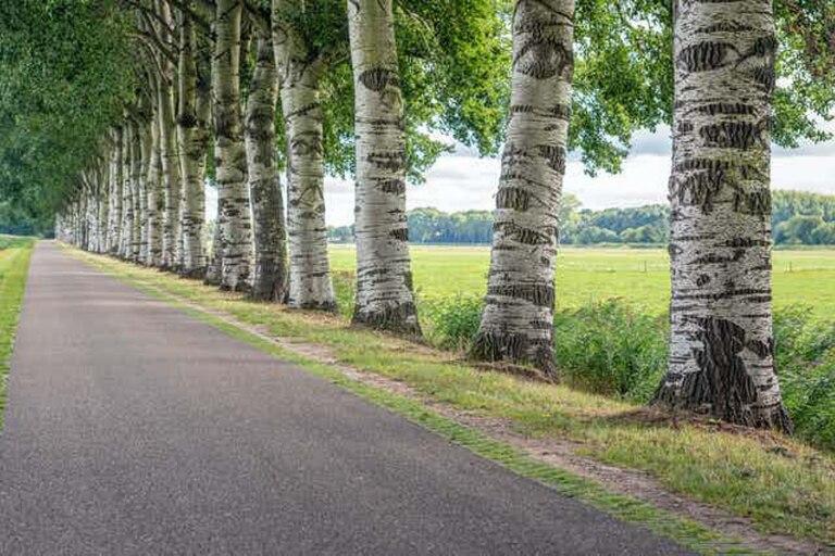 Cómo los árboles pueden ayudarnos a eliminar contaminantes cancerígenos del ambiente