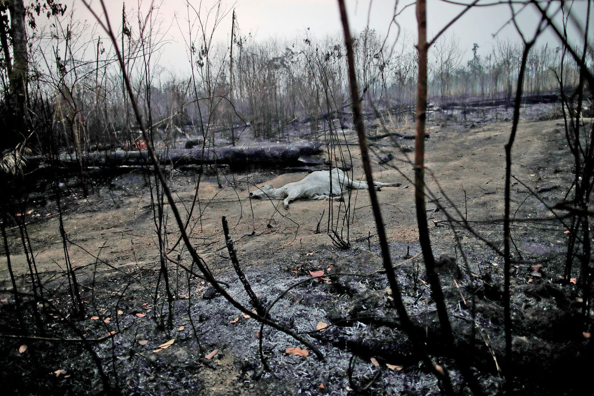 Continúan los incendios en el Amazonas