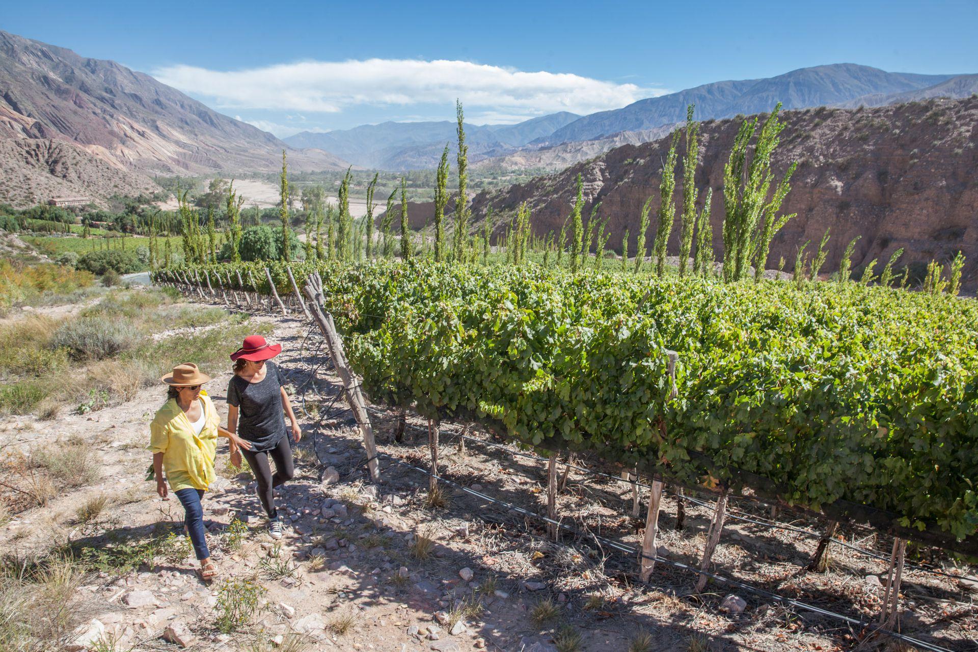 Recorrida por los viñedos de la bodega Dupont, rodeada de cerros.