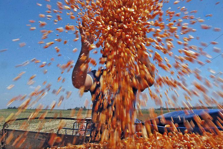 Fue récord la exportación de maíz: 36 millones de toneladas