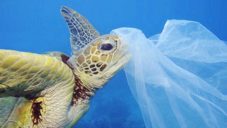 Día mundial de los oceanos